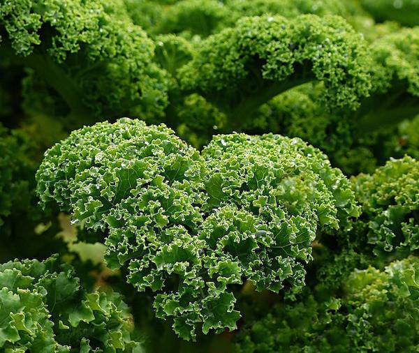 kale-healthy-foods-pixabay-oldiefan-600x506